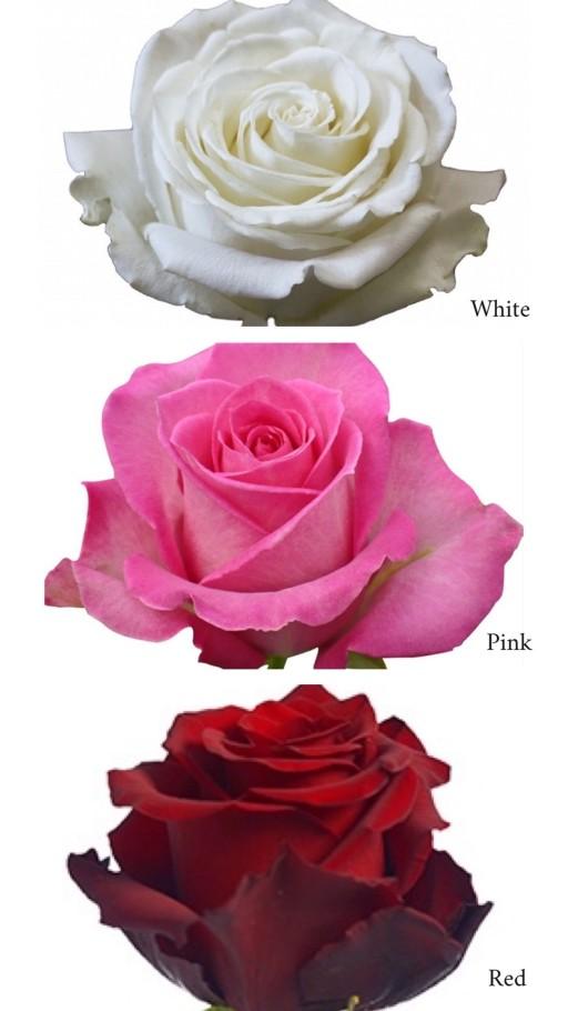 Fresh Roses Orlando